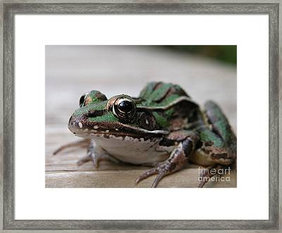 Kiss My Prince Charming Framed Print by Jack Norton