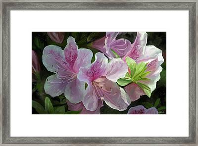 Kissed By Sunlight Framed Print by Steve Goad