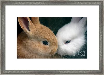Kissing Cousin's Framed Print