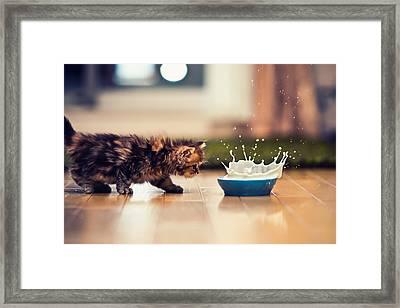 Kitten And Bowl Of Milk Framed Print by Benjamin Torode
