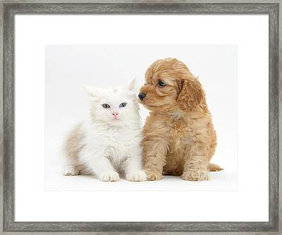 Kitten And Cockatoo Pup Framed Print by Mark Taylor