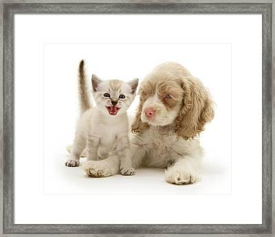 Kitten And Cocker Spaniel Puppy Framed Print by Jane Burton