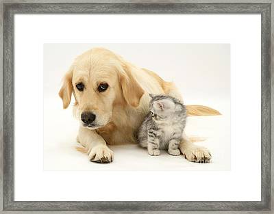Kitten And Dog Framed Print