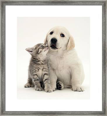 Kitten And Puppy Framed Print by Jane Burton