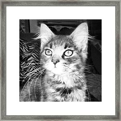 Kitten Framed Print by Angela Garrison