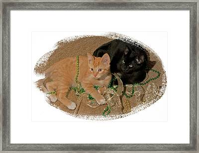 Kitten Brothers Framed Print