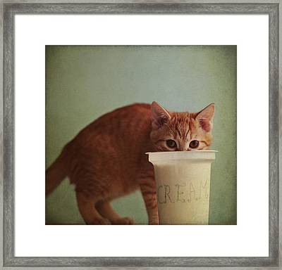 Kitten Eating From Big Pot Of  Cream Framed Print by By Julie Mcinnes