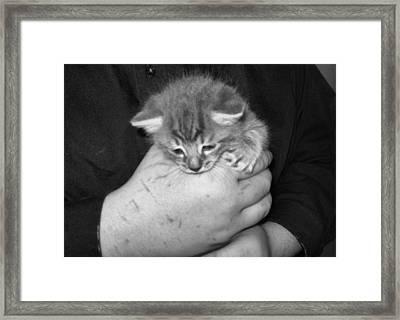 Kitten Frenzy Love Framed Print by Juliana  Blessington
