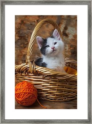 Kitten In Basket With Orange Yarn Framed Print by Garry Gay