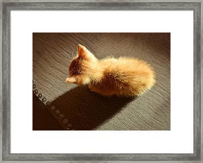 Kitten In Light Framed Print