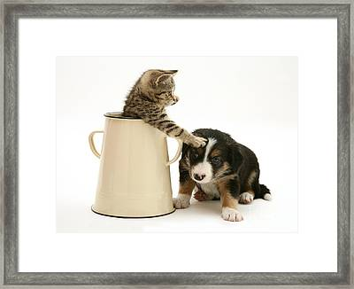 Kitten In Pot With Pup Framed Print by Jane Burton