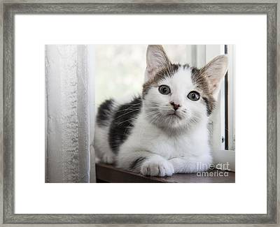 Kitten In The Window Framed Print