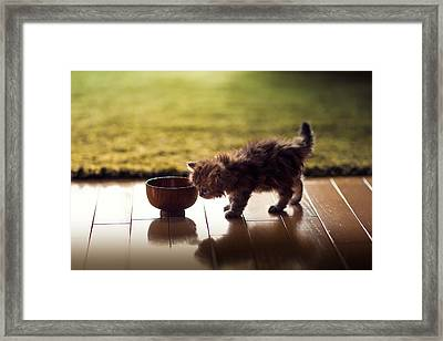 Kitten Investigating Miso Soup Bowl Framed Print by Benjamin Torode