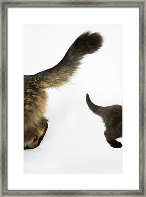 Kitten Looking Up At Mothers Tale. Framed Print by Nicola Tree