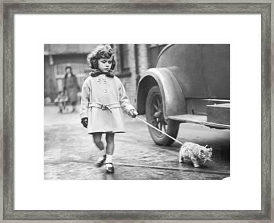 Kitten On Lead Framed Print by Fox Photos