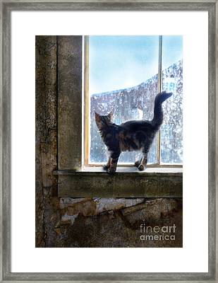 Kitten On Windowsill Of Abandoned House Framed Print by Jill Battaglia