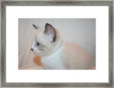 Kitten Profile Framed Print by Eduardo Bouzas