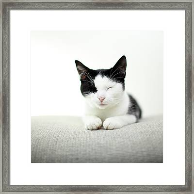Kitten Sleeping Framed Print