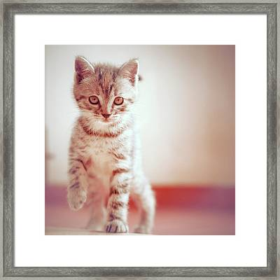 Kitten Walking On Floor Framed Print
