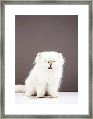 Kitten With Eyes Closed Framed Print by Martin Poole