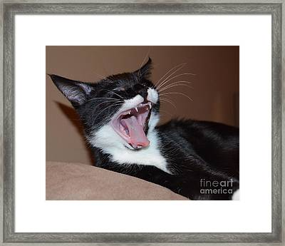 Kitten Yawns Framed Print by Melissa Goodrich