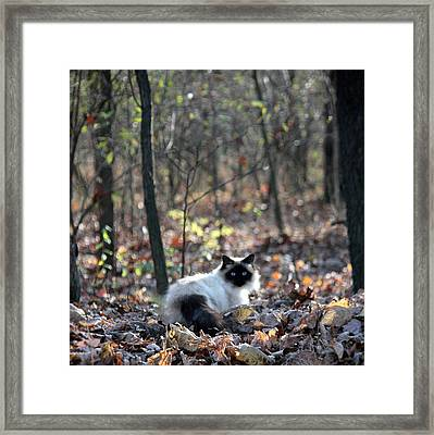 Kitty And Bokeh Framed Print