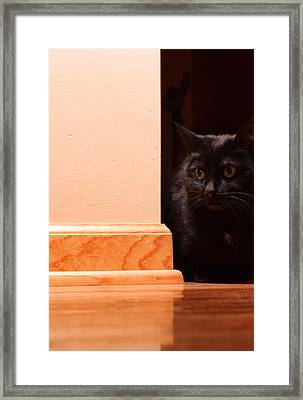 Kitty Corner Framed Print by Peter Chilelli