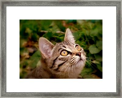 Kitty Eyes 2 Framed Print by Cindy Wright