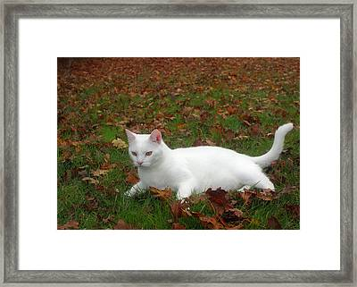Kitty In The Leaves Framed Print by Tyra  OBryant
