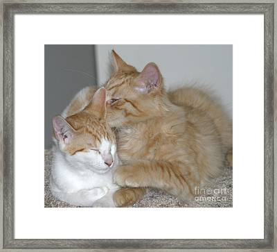 Kitty Kat Secrets Framed Print by Living Color Photography Lorraine Lynch