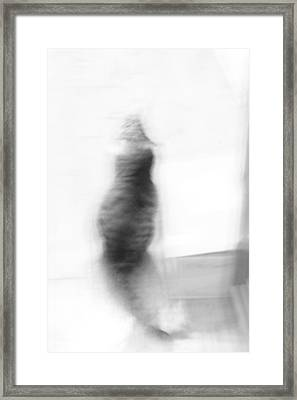 Kitty Framed Print by Nina Mirhabibi