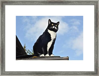 Framed Print featuring the photograph Minnie Kitty Of Destiny by Ronda Broatch