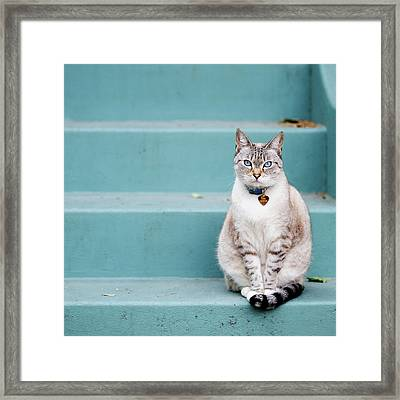 Kitty On Blue Steps Framed Print