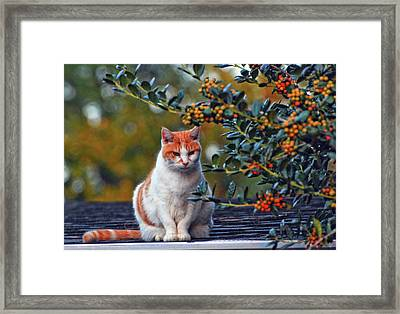 Kitty On The Roof Framed Print by Margaret Palmer