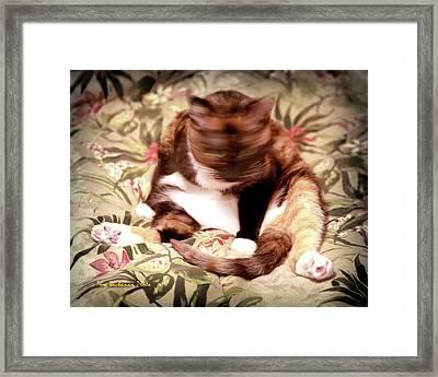 Kitty Says No Framed Print