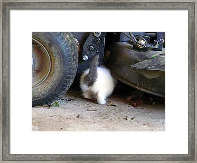 Framed Print featuring the photograph Kitty Toy by Rdr Creative