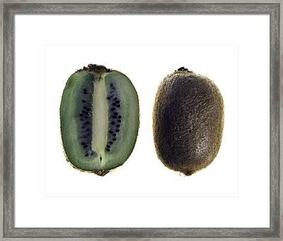 Kiwi Framed Print by Nathaniel Kolby