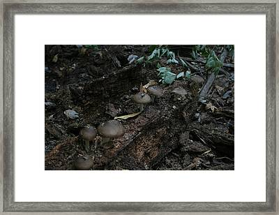 Knight Shift Framed Print by Sean Green
