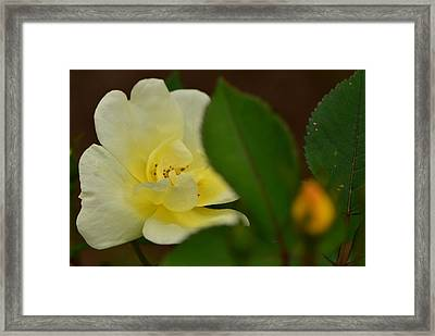 Framed Print featuring the photograph Knock Me Out... by Tanya Tanski