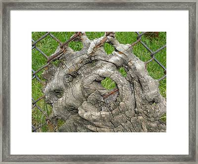 Framed Print featuring the photograph Knot In Fence 1 by Christophe Ennis