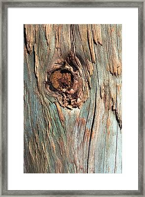 Knot Framed Print by John Foxx