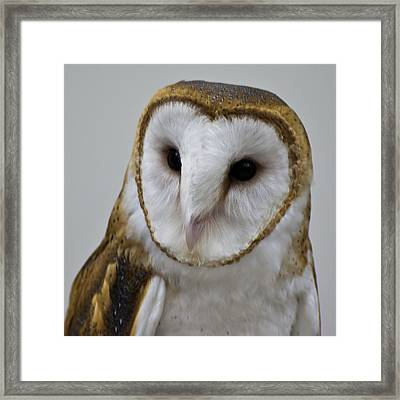 Knowing Barn Owl Framed Print by LeeAnn McLaneGoetz McLaneGoetzStudioLLCcom