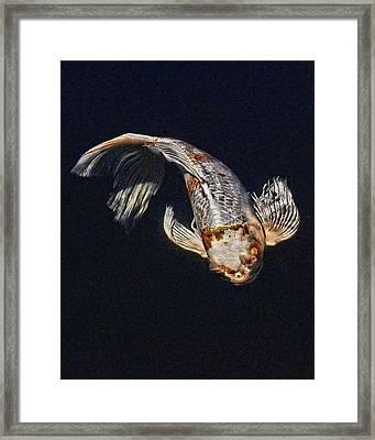 Koi Ballet Framed Print