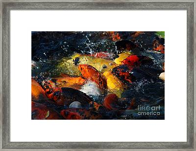 Framed Print featuring the photograph Koi Fish by Eva Kaufman