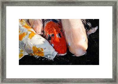 Framed Print featuring the photograph Koi Fish by Werner Lehmann
