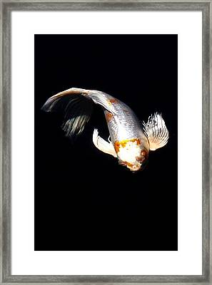 Koi From Above Framed Print by Don Mann