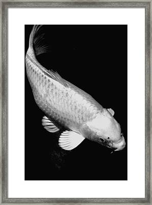 Koi In Monochrome Framed Print