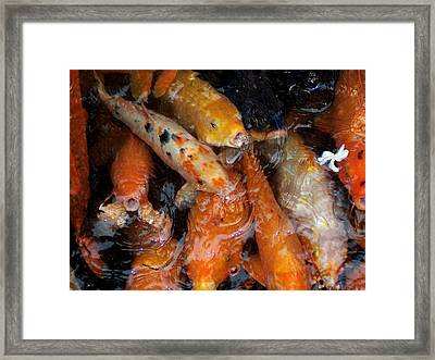 Framed Print featuring the photograph Koi In Pond by Peter Mooyman