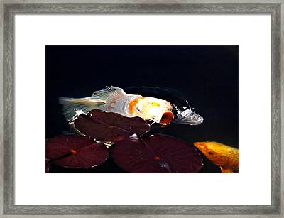 Koi In The Lillies Framed Print by Don Mann