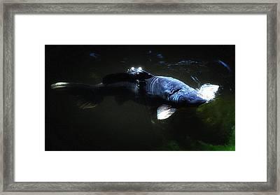 Koi Into The Light Framed Print by Don Mann